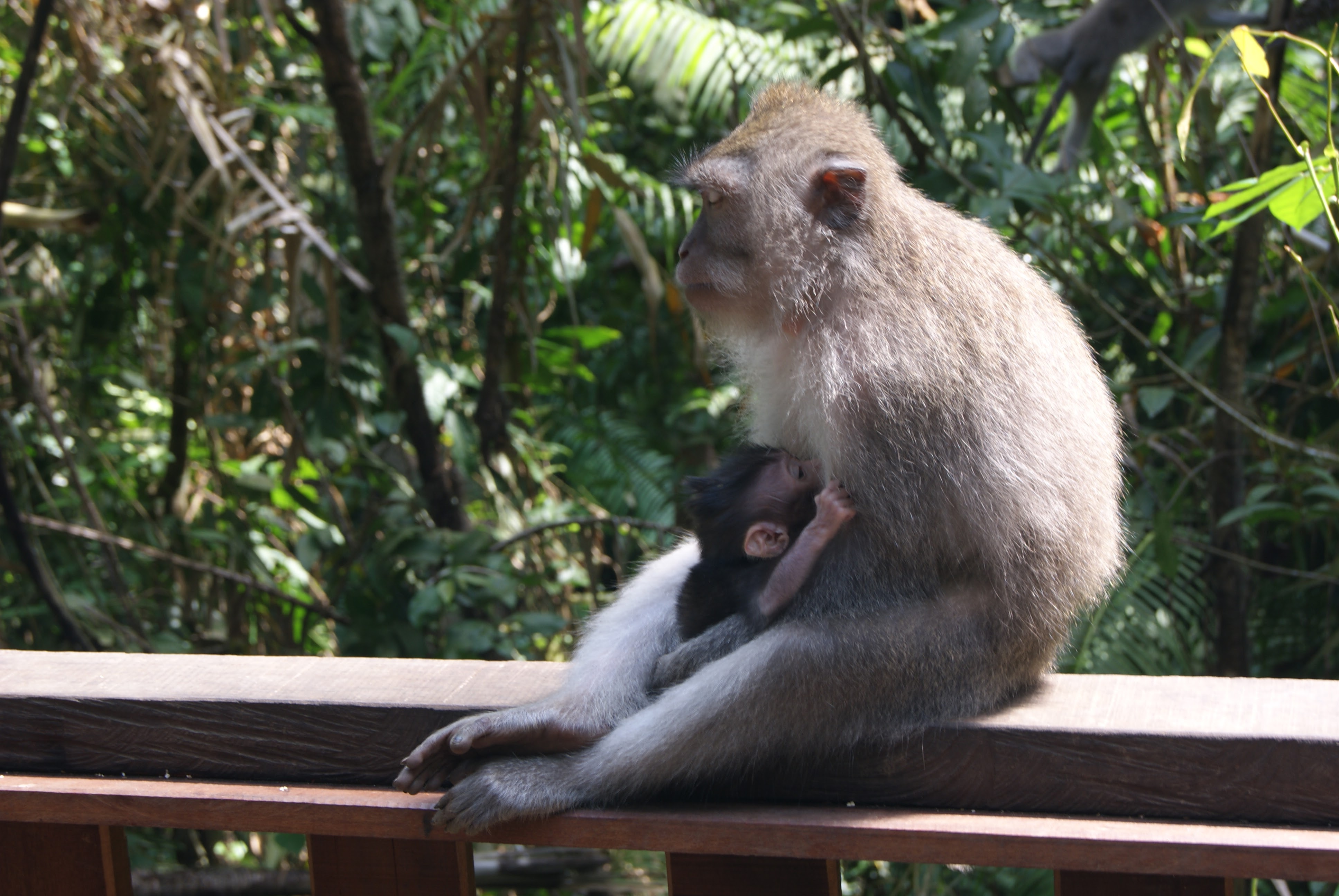 Things to do in Ubud Bali - Monkey Forest
