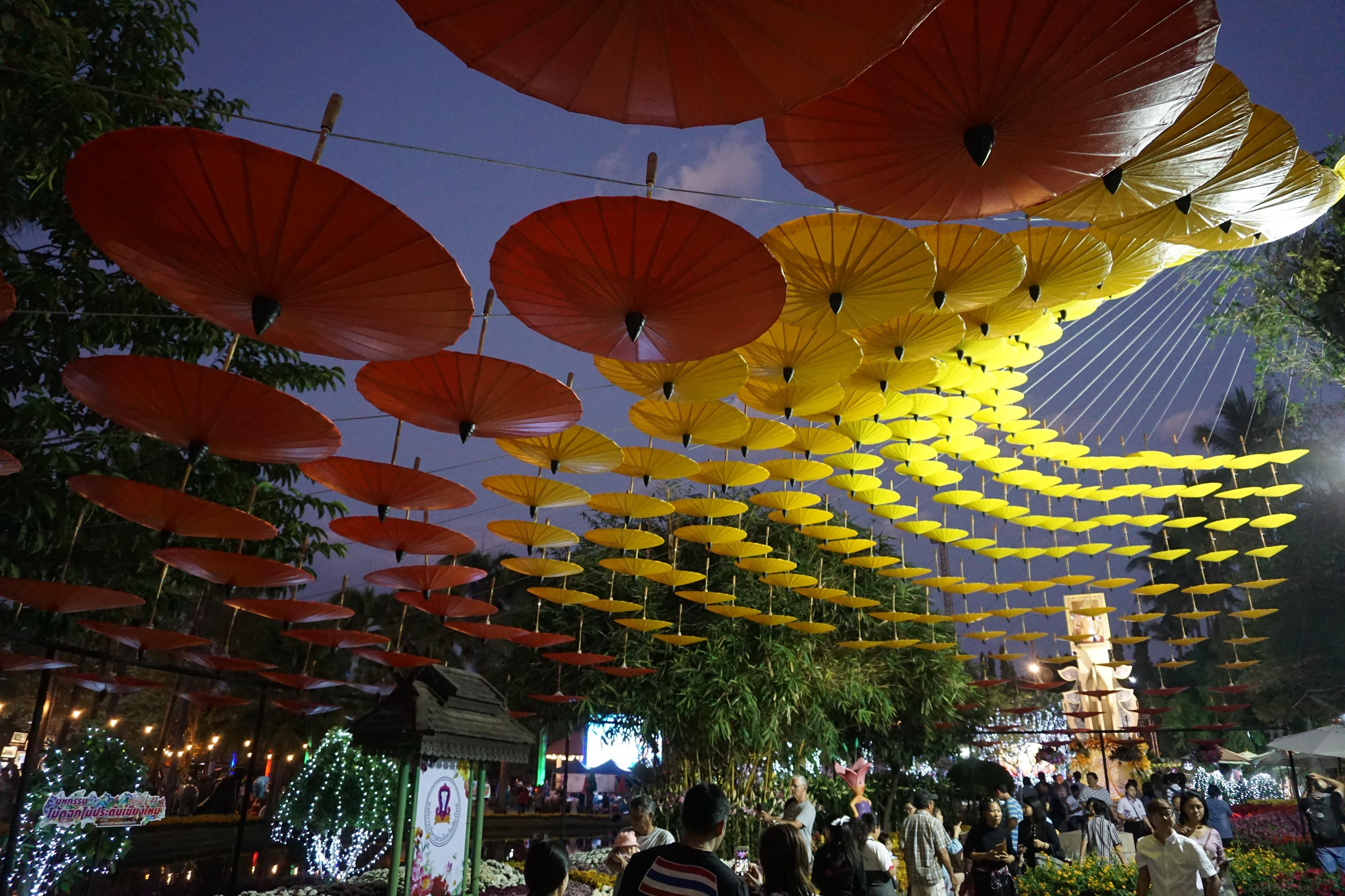 Chiang-May-Insights