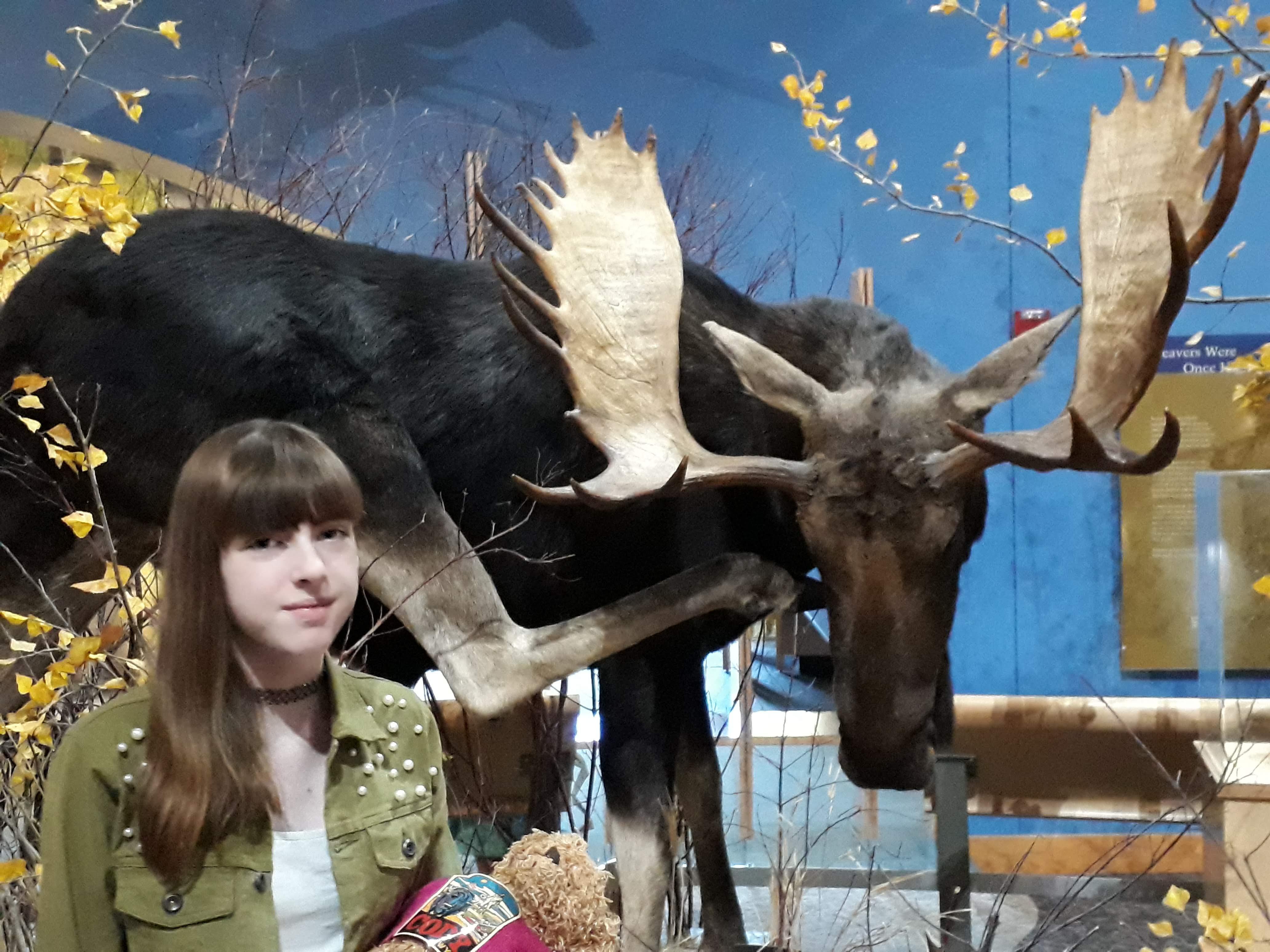 Cody - Wyoming - Moose Exhibit