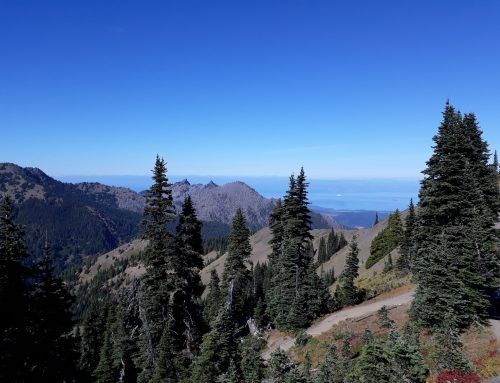 THINGS TO DO IN OLYMPIC NATIONAL PARK FOR FAMILIES